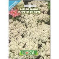 Alisyum Çiçek Tohumu - Paket
