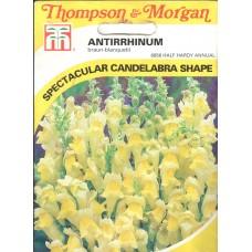 Antirrhinum Çiçeği Tohumu - 100 ad - Paket