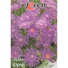 Aster Çiçeği Tohumu - Paket