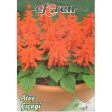 Ateş Çiçeği Tohumu - Paket
