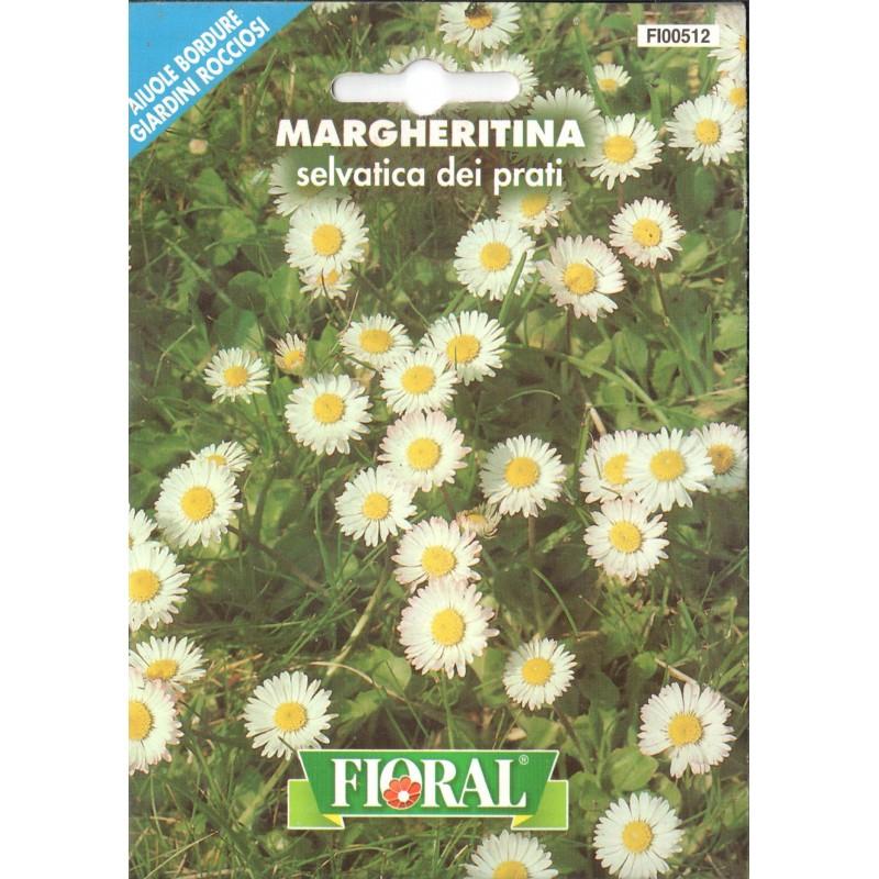 Çayır Papatyası Çiçek Tohumu - Paket