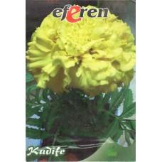 Kadife Çiçeği Tohumu - 25  Adet - Paket