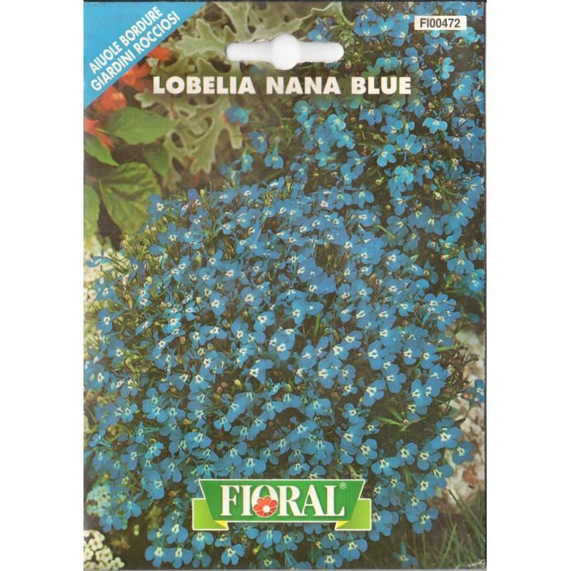 Lobelya Çiçek Tohumu - Paket