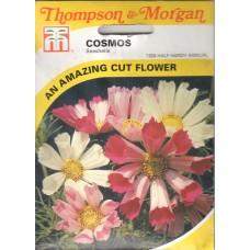 Cosmos Çiçeği Tohumu - 100 ad - Paket
