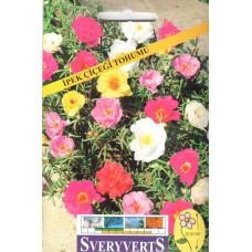 İpek Çiçeği Tohumu - Paket